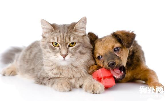 让猫狗和谐相处的四个小妙招